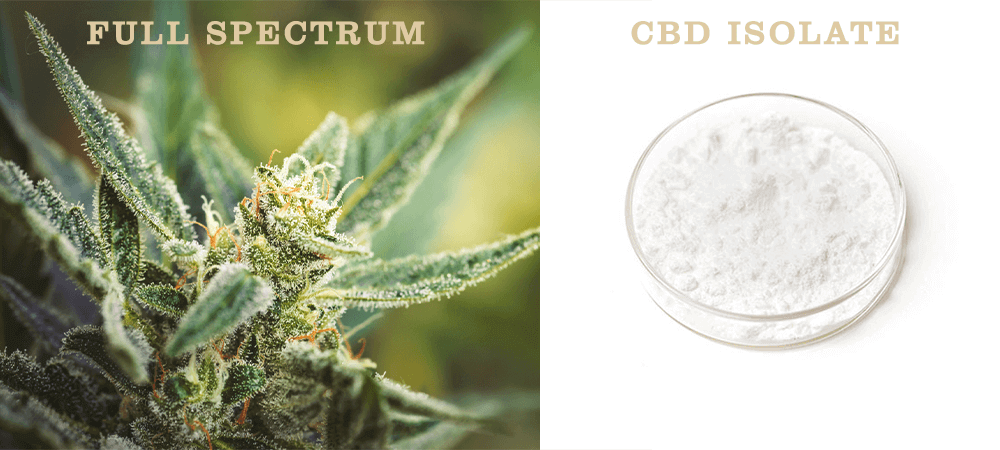 Full spectrum CBD compared to CBD isolate